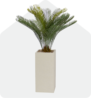 Palm plant in ivory square pot