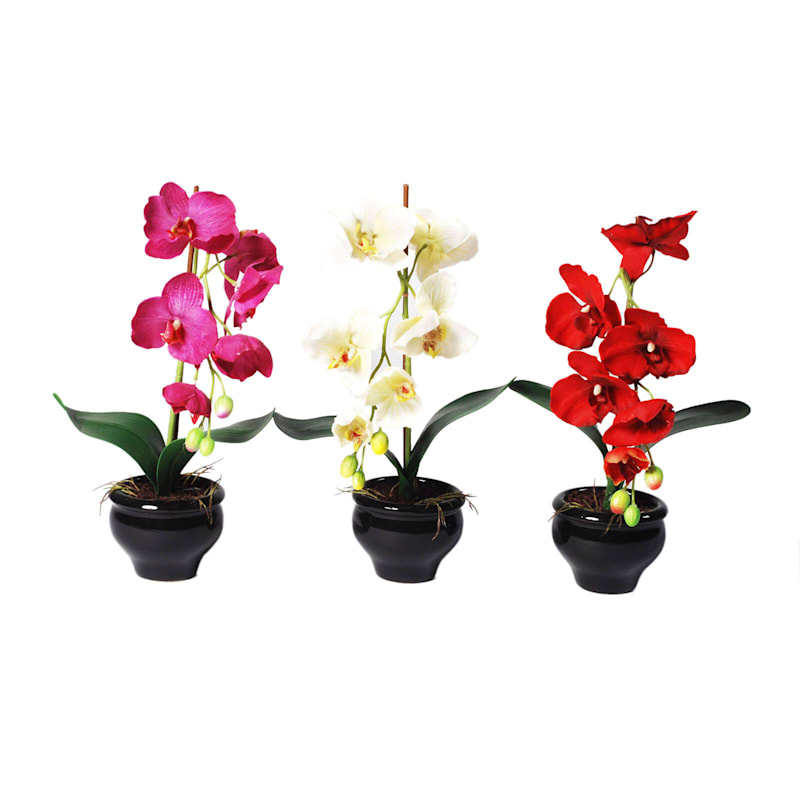 15in. Orchid Black Ped Pot 3Ast