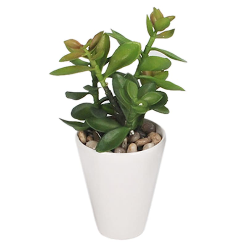 8in. Succulents White Vase 12Ast