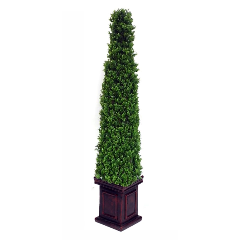 Pyramid Boxwood Topiary 48 In