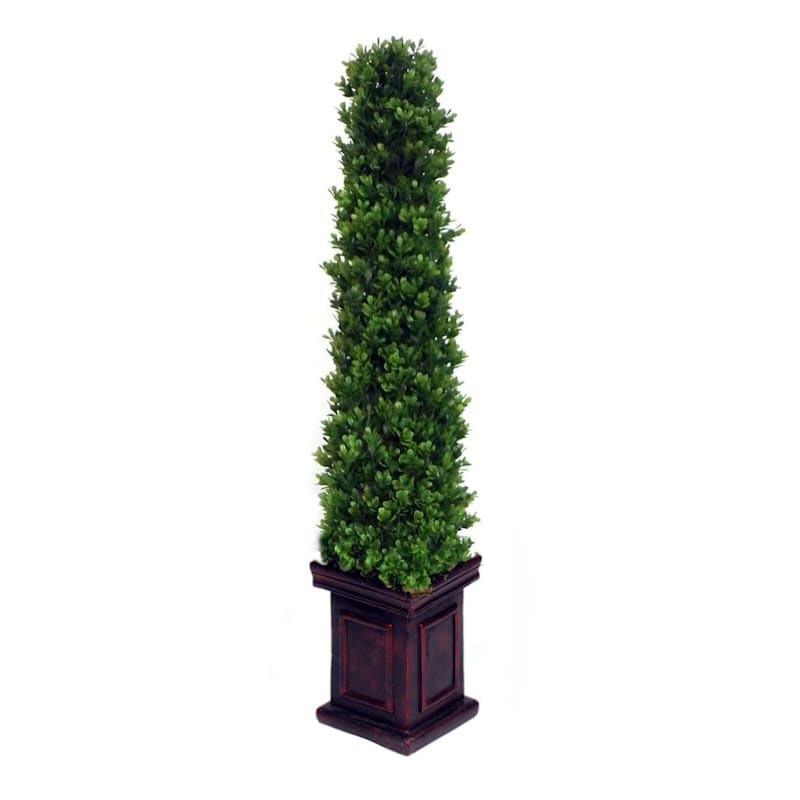 Pyramid Boxwood Topiary 36 In