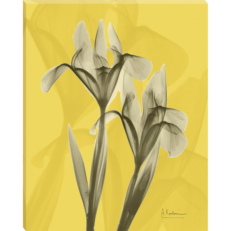 16 X 20-in White Rain Lily Studio Art