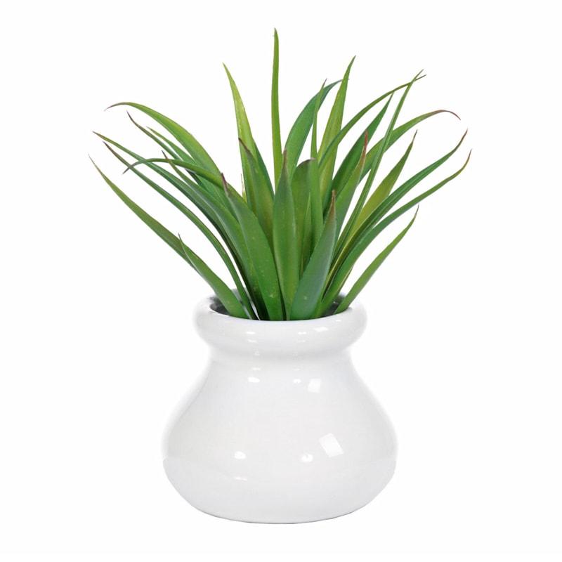 Agave In White Ceramic Pot 6In