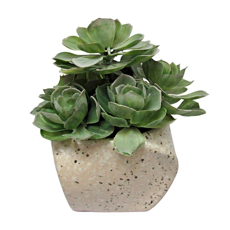 8in. Succulent In Stone Look Pot