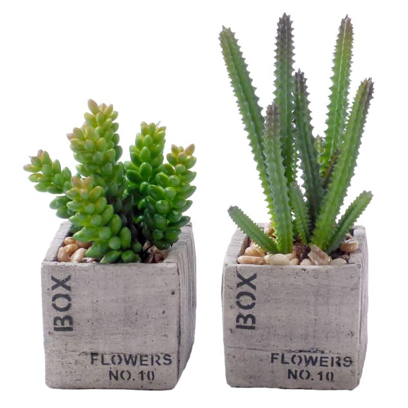 6in. Succulent Flower Box
