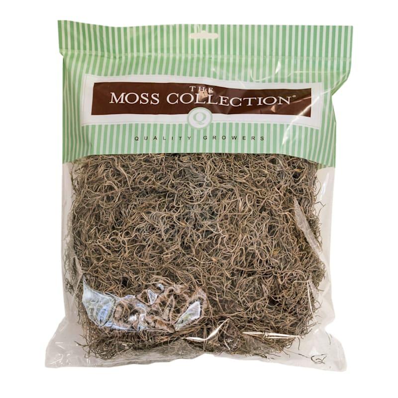 Medium Natural Spanish Moss