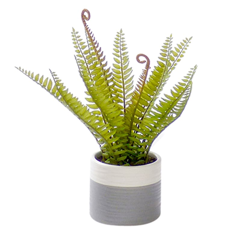 11in. Fern In Pot 3Assorted
