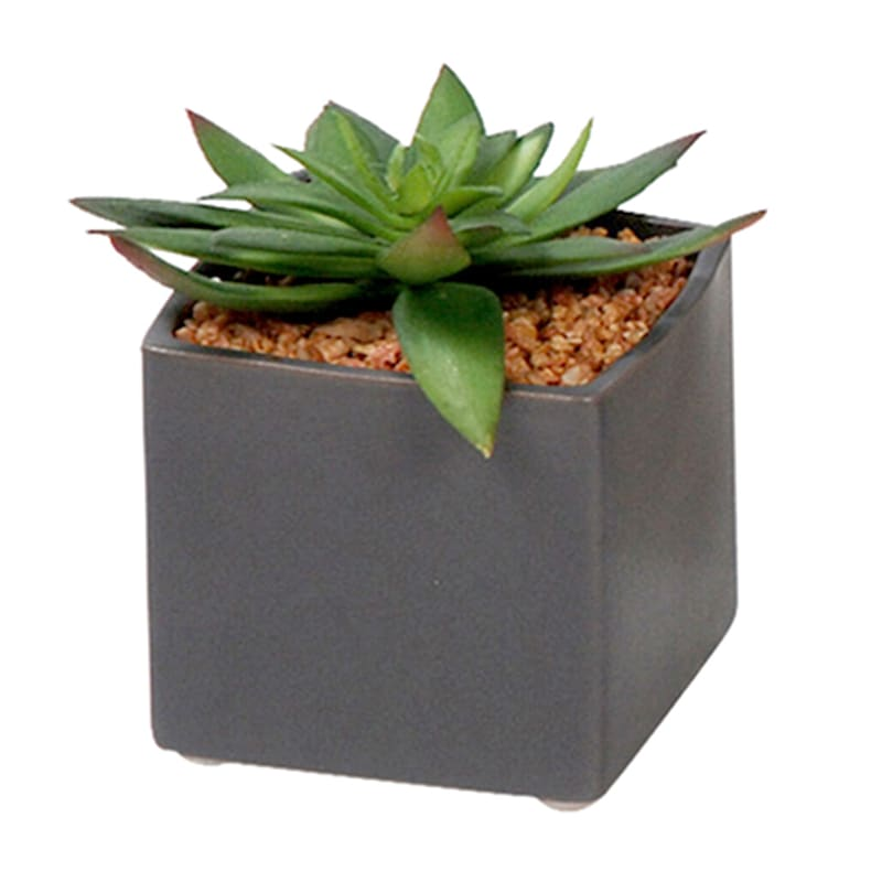 4in. Succulent In Ceramic