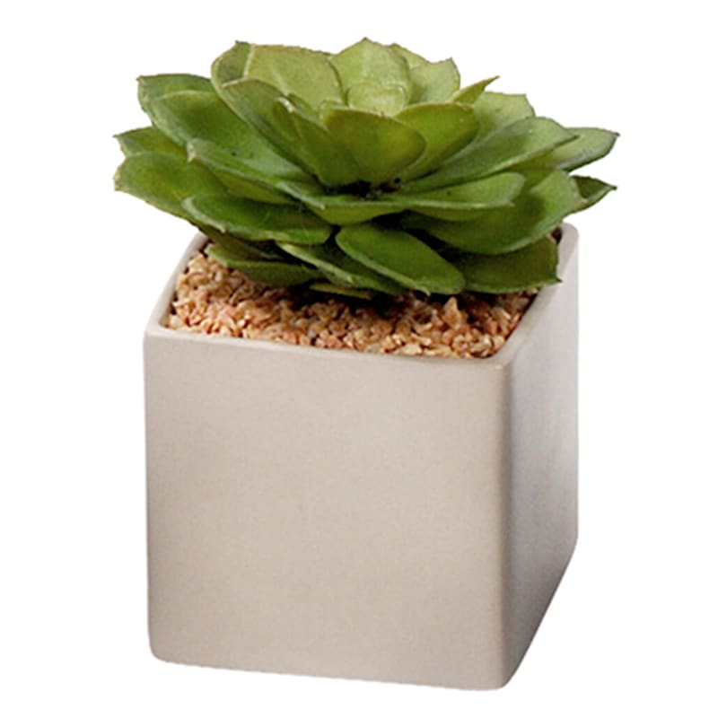 "Green Artificial Succulent in Ceramic Square Pot, 4"""