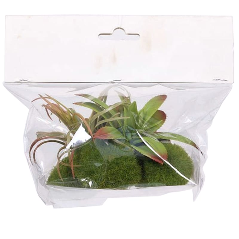 Succulent in Bag