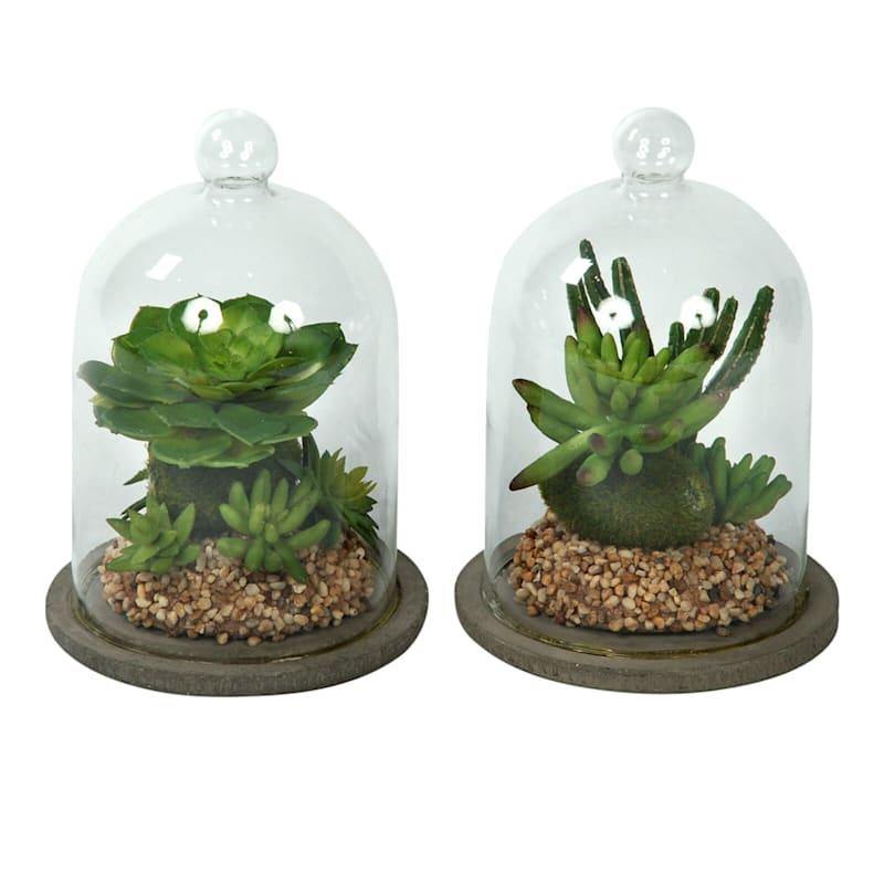 7.55 H Succulents In Glass