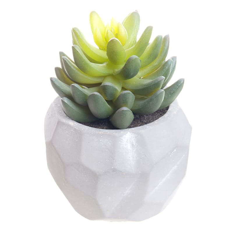 5.5in. Mini Agave In Pot