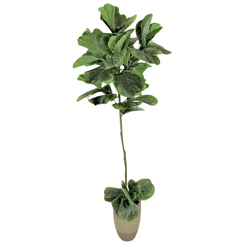 6 ft. Fig In Deco Pot