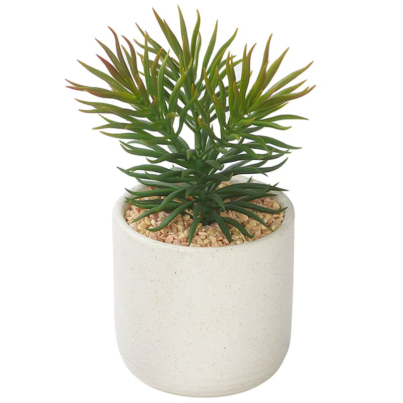 8in. Succulent In White Pot