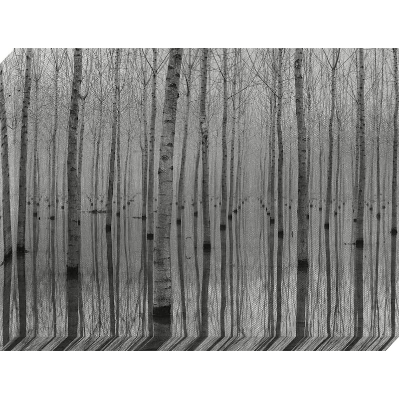 30X40 Birch Trees Textured Canvas