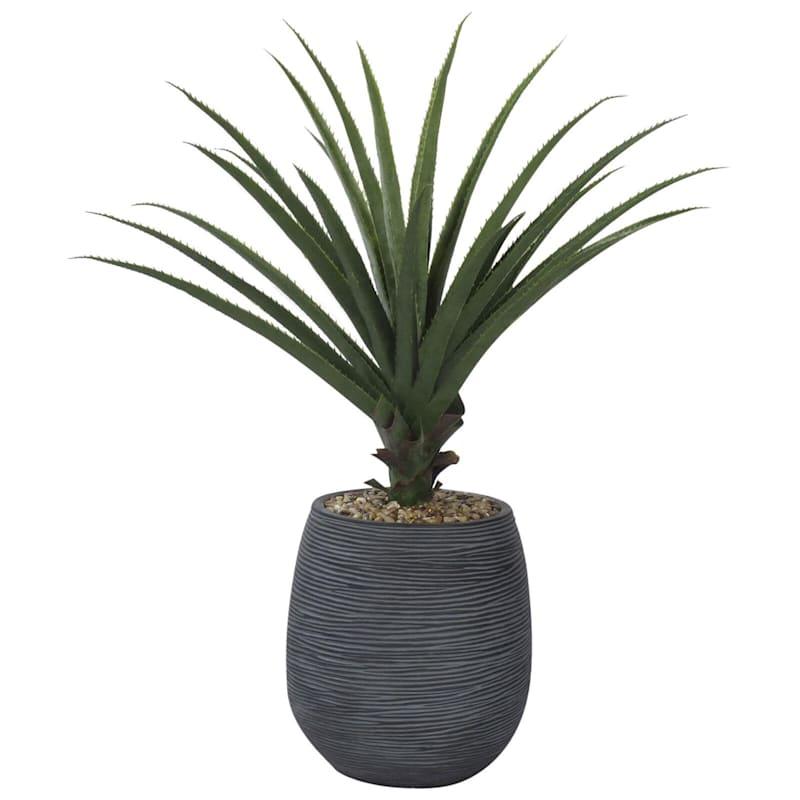 41in. Aloe W/Textured Black Pot