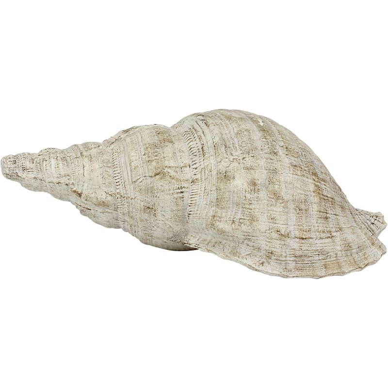 10X5 Res Conch Shell