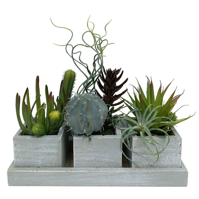 11X10 Succulent In Cement Trio