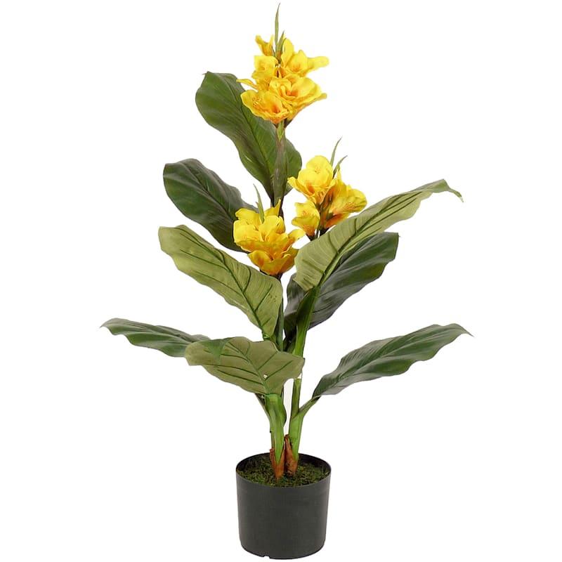 Musa Plant 3ft. Yellow