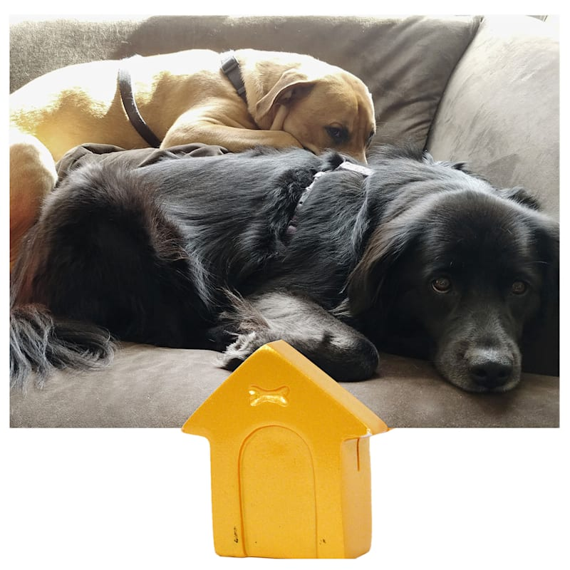 DOG HOUSE PICTURE CLIPPIE