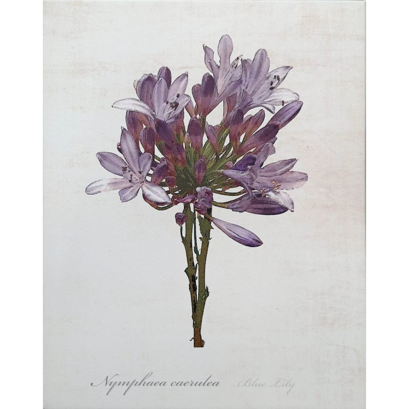 11X14 Sketchbook Lily Canvas Art