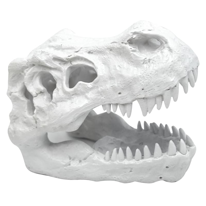 Resin White T Rex Fossil Head 5.5in.
