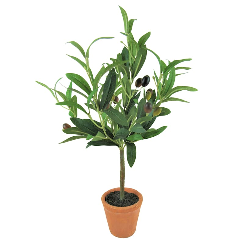 OLIVE TREE TERRA COTTA