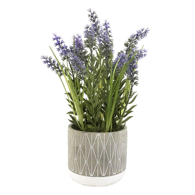 13.5in. Lavender In Cement Pot