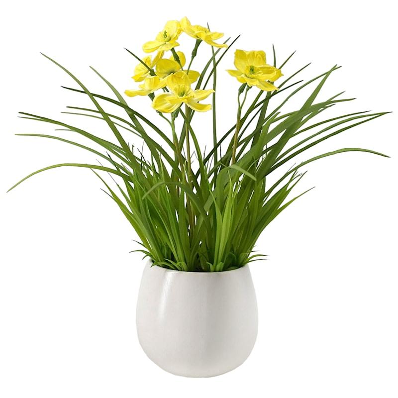 14in. Narcissus In Ceramic Pot