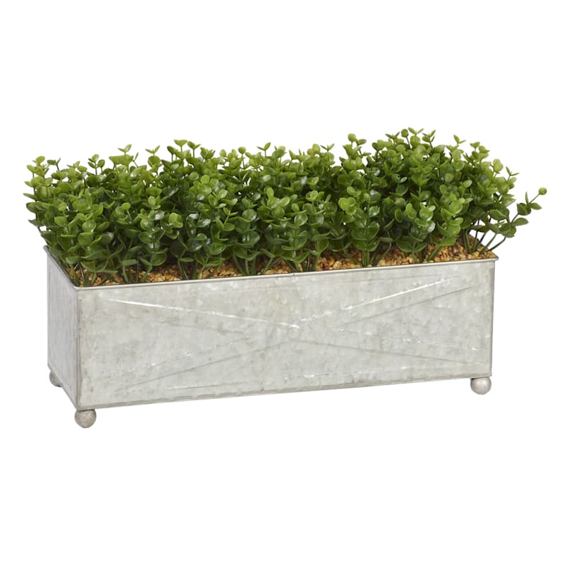 17W BOXWOOD IN METAL POT
