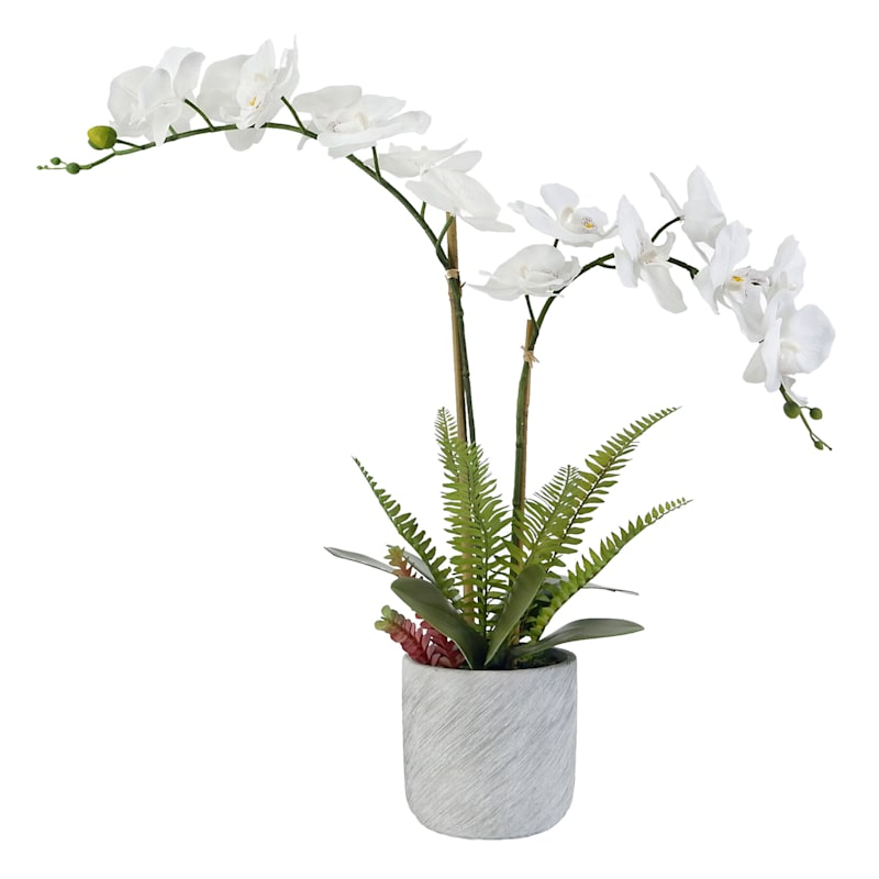 25IN ORCHID IN CEMENT POT