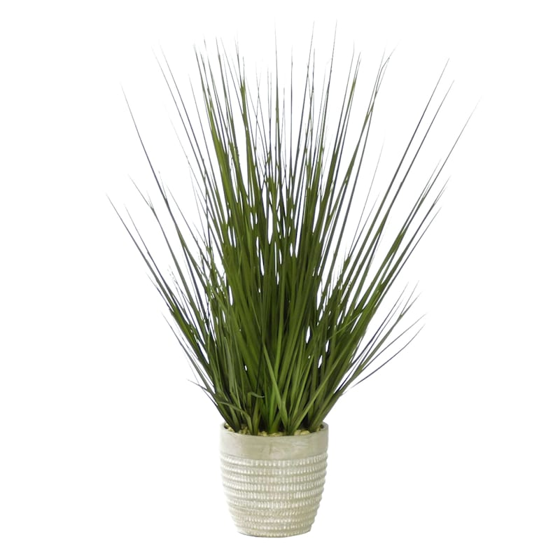 31IN ONION GRASS IN CEMENT POT