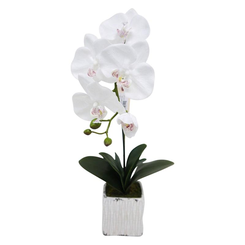 22in. Rt White Phalnpsis Ceramic Pot