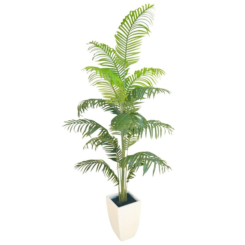 6 Areca Palm In White Ceramic Pot