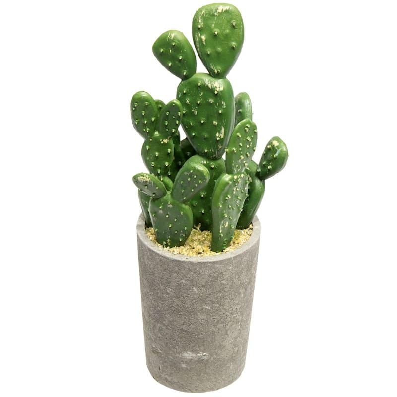 7-8in. Cactus (assorted)