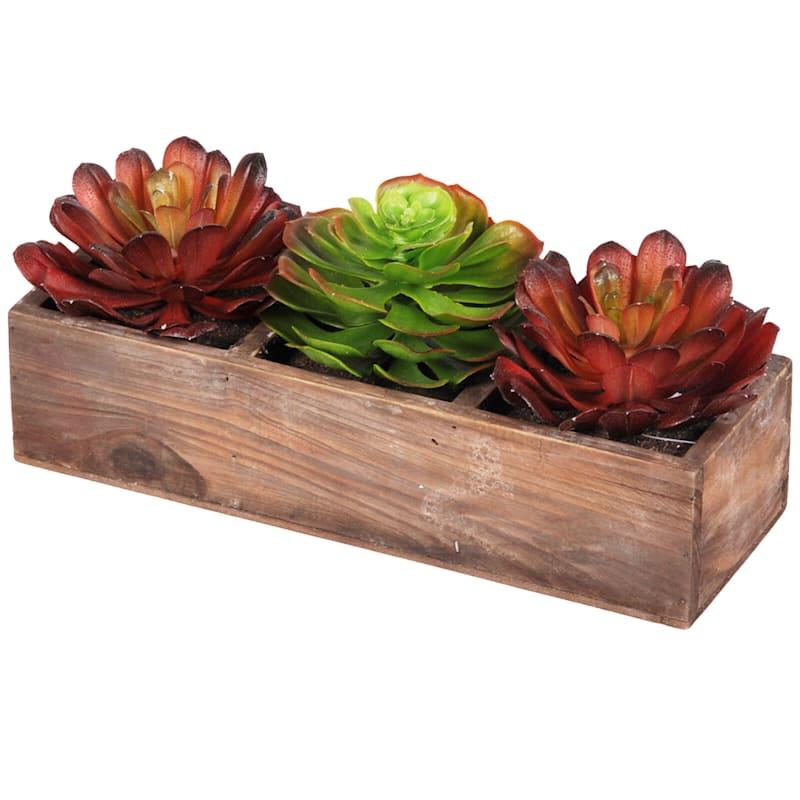 5 Succulents In A Wooden Pot