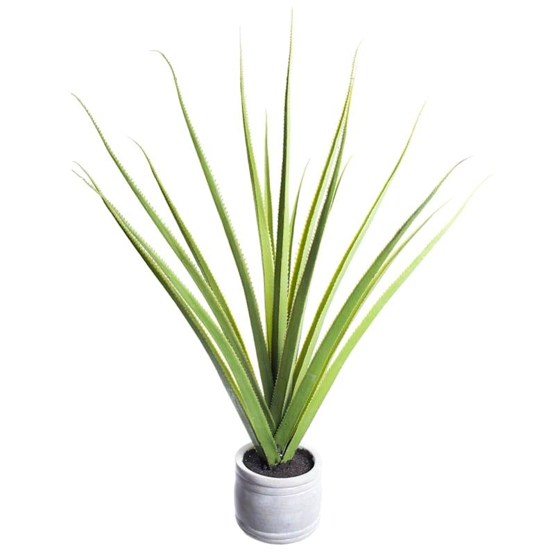 36X16 Aloe In Cement Pot