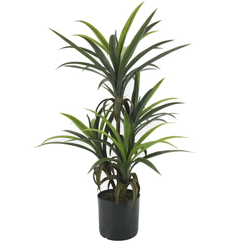 33in. H Yucca Tree
