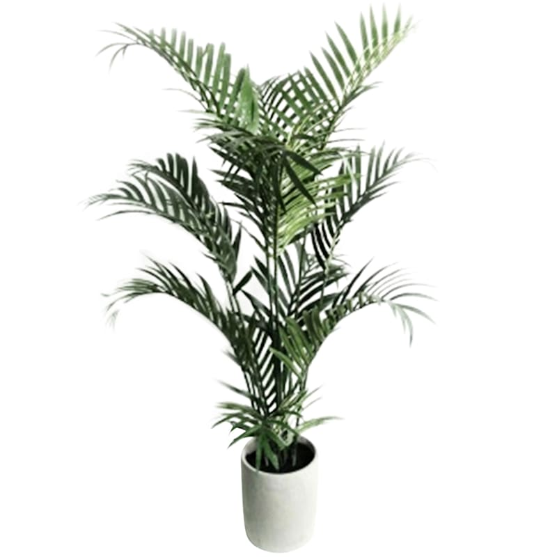 48in. Areca Palm W/Cement Pot