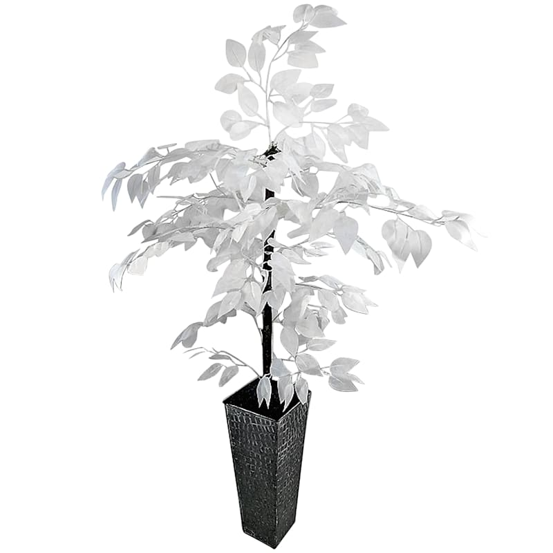 4 ft. White Ficus