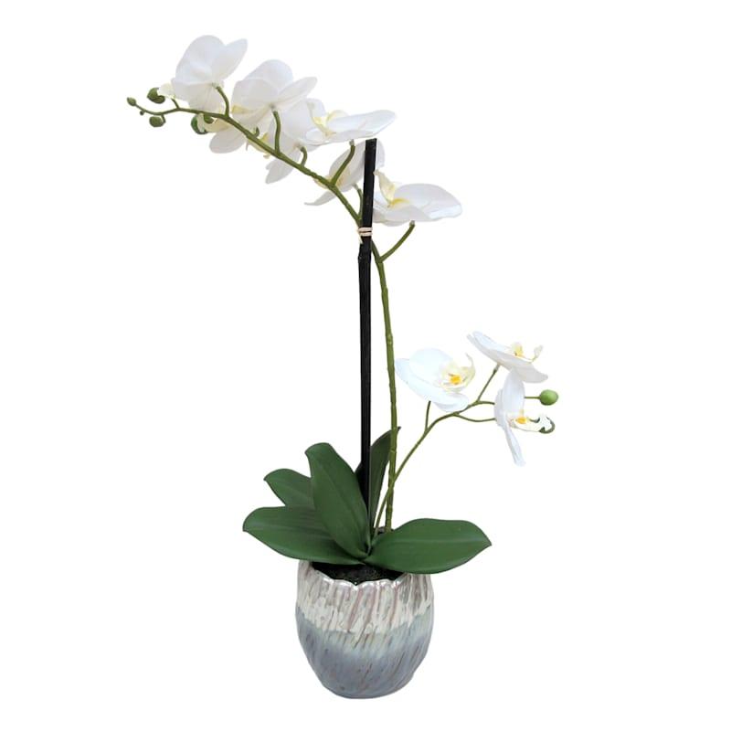 18X13 White Phal Orchid Art Pot