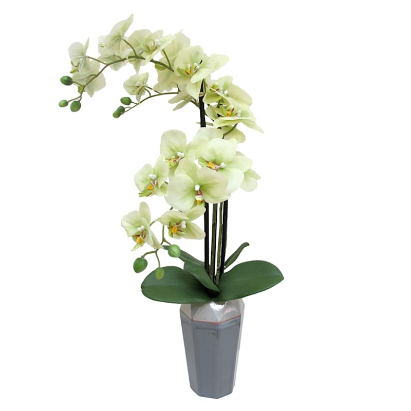 27X14 Gr Phal Orchid Art Pot