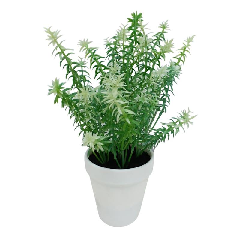 Foliage in White Pot