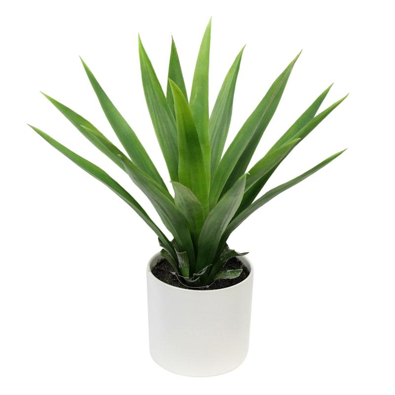 Yucca Plant W/Pot 23