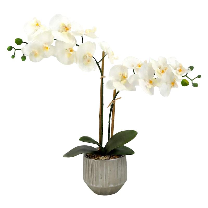 22in. Orchid In White Ceramic P