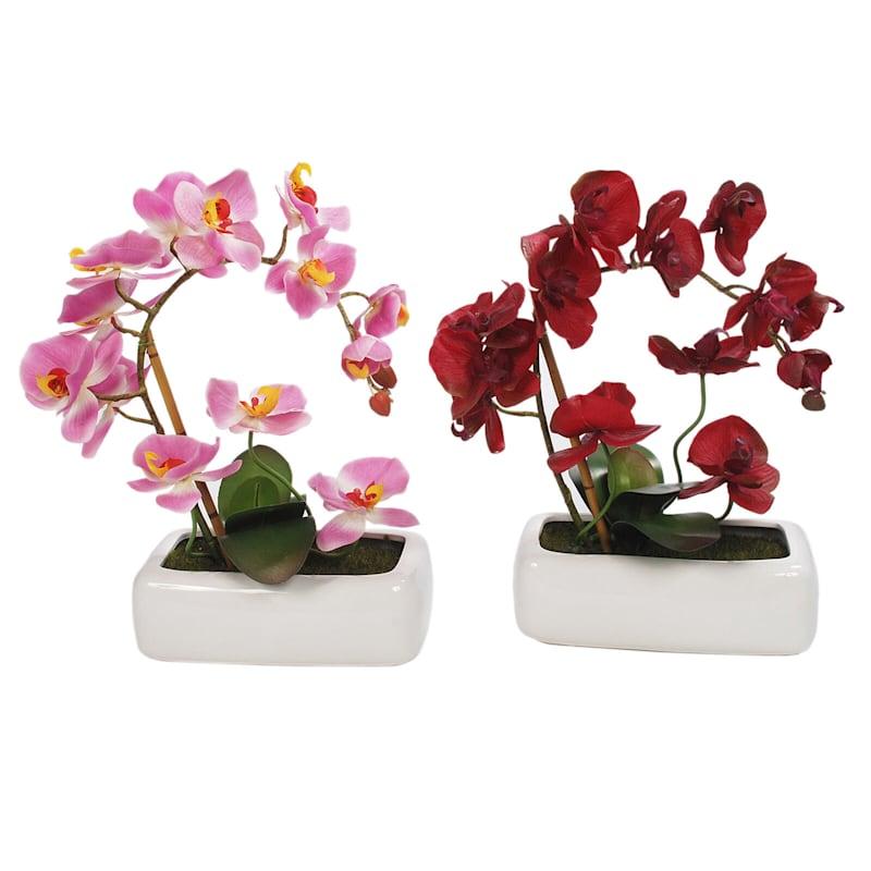 16.5in. Orchid Arrange 3 Asst