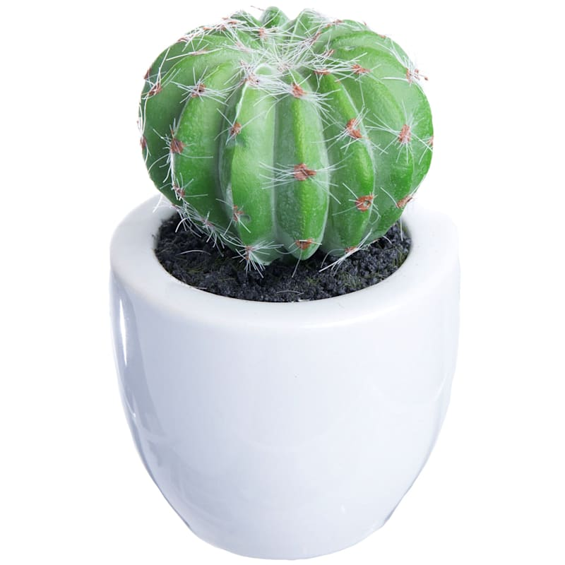 Round Cactus White Pot 6X6 In