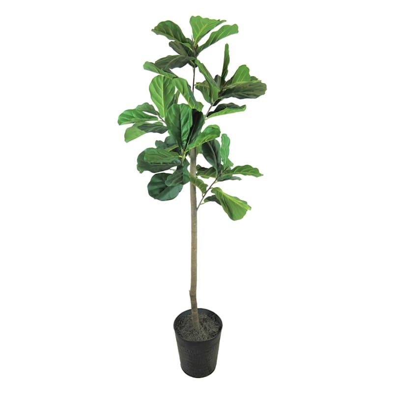 Fig Metal Pot Tree, 6'