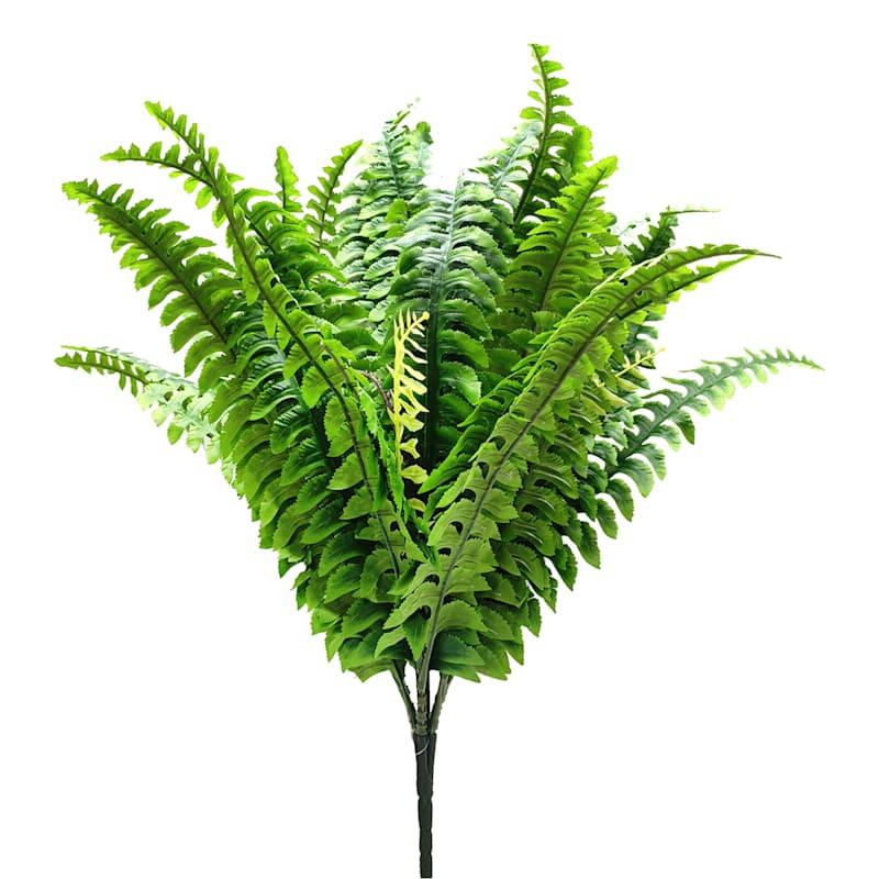 Boston Fern Bush X 4 W/48 Leaves