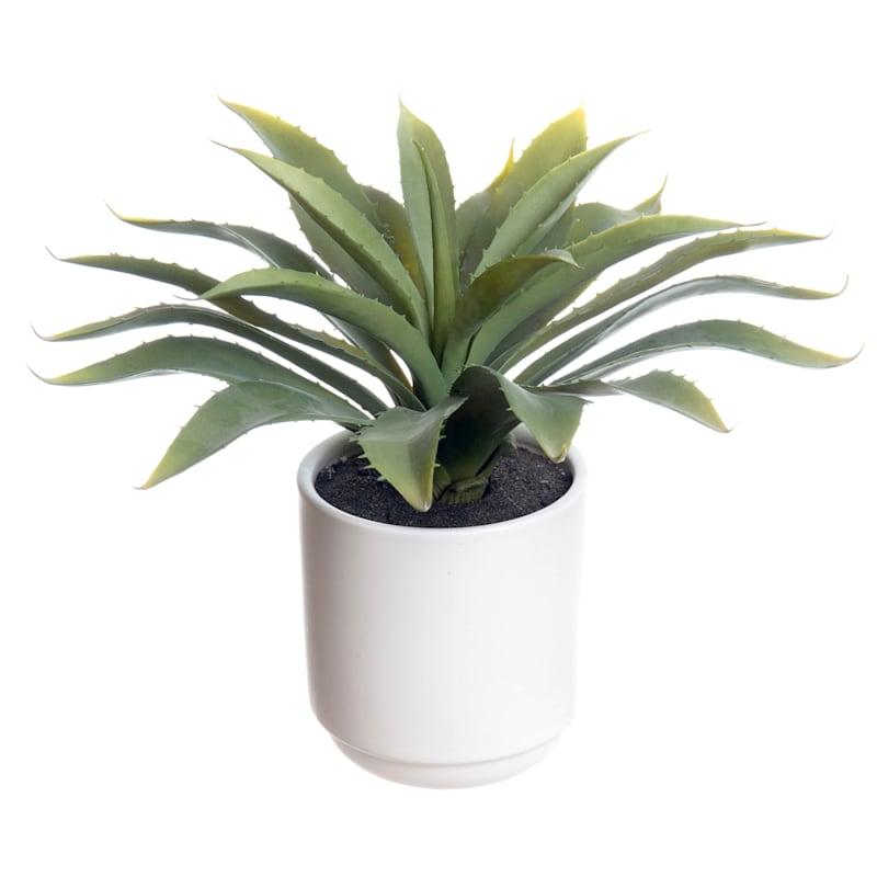 Yucca W/Pot 12 H